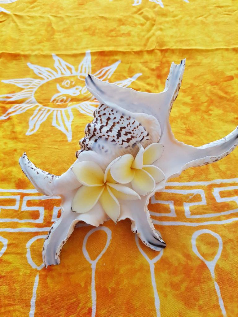 Venusblume Lichtzentrum Melinda Hebenstreit Lomi Lomi Massage Behandlungsraum Nüziders